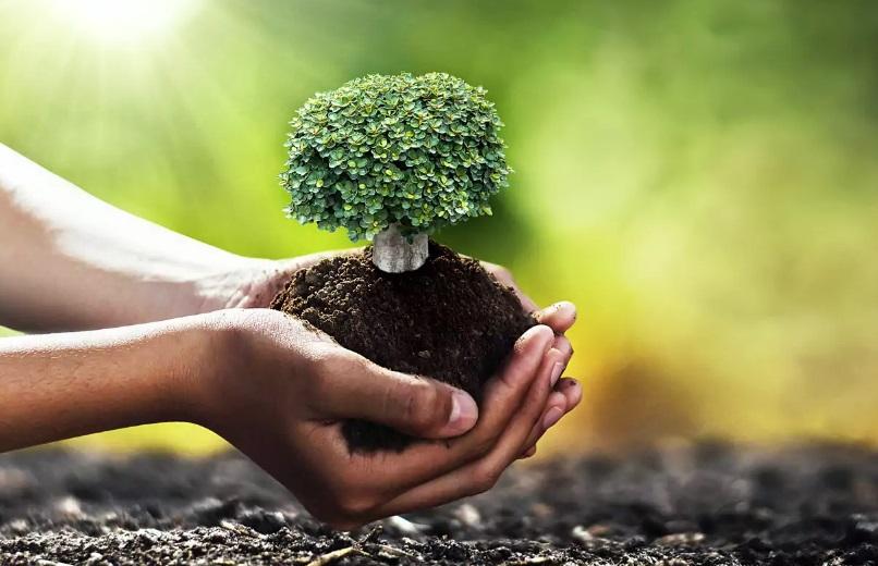 Un arbre dans les mains